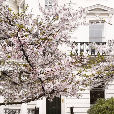 How to Spend a May Day in London's Poshest Neighborhood