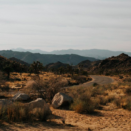 Roadtripping Through Joshua Tree