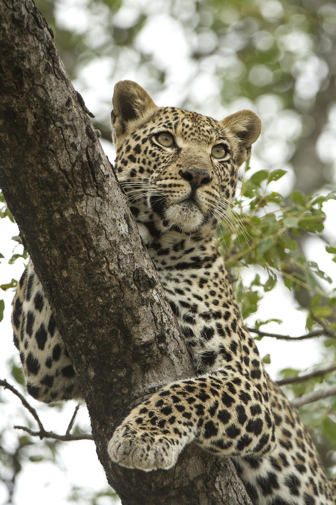 Singita Castleton promotes wildlife conservation and anti-poaching.