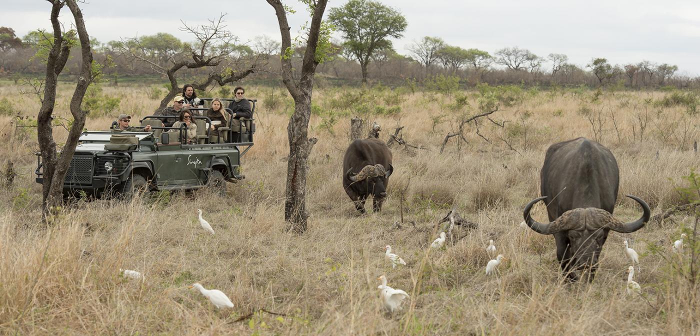 Let Singita Castleton give you a guided safari of the wildlife surrounding their stunning resort.