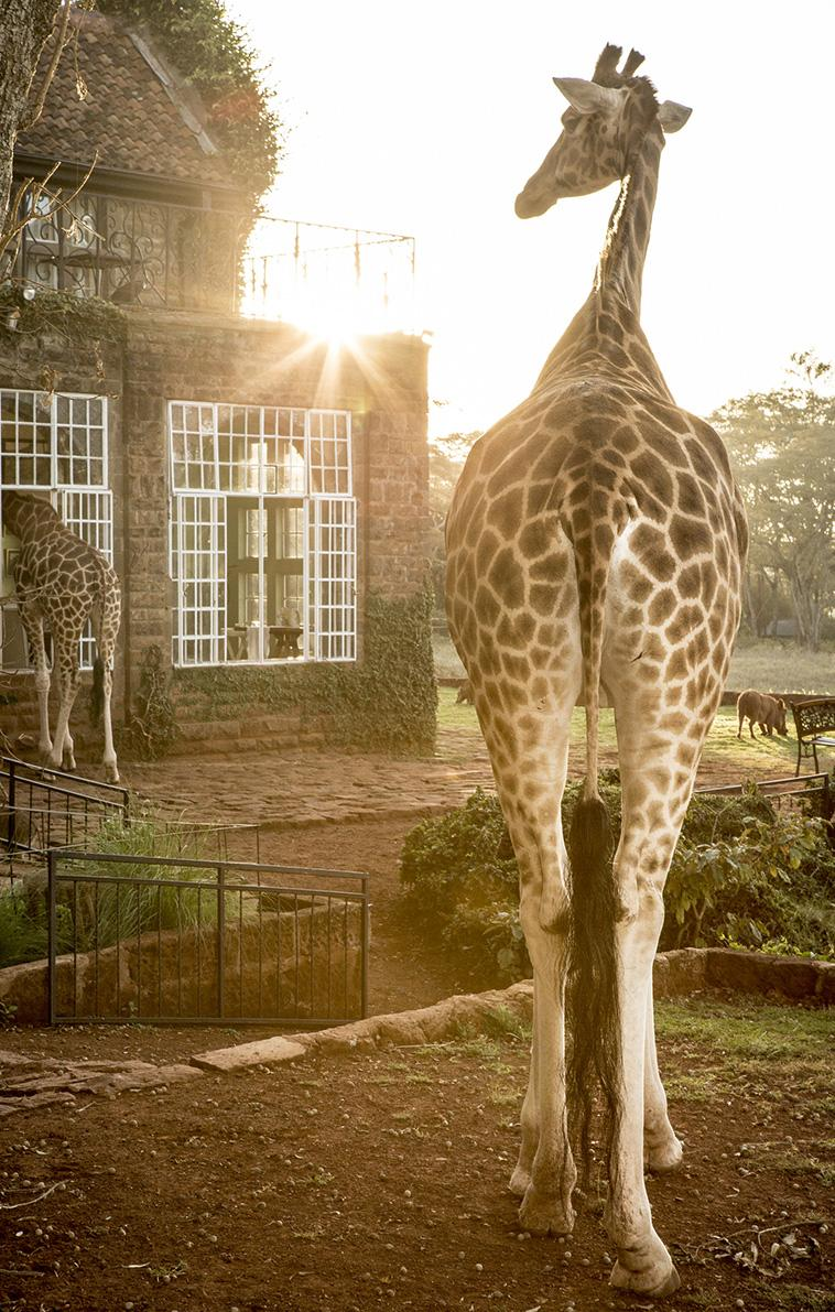 Giraffe Manor in Nairobi