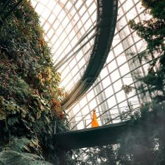 You Can Walk Through a Cloud Forest in Singapore