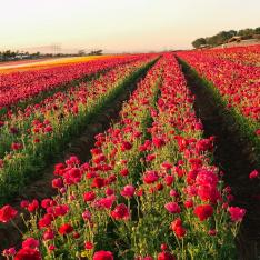 You Can Dine Among 50 Acres of Flowers During Carlsbad's Petal to Plate