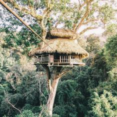 These Treehouses Are so High off the Ground You Can Only Access Them via Zipline