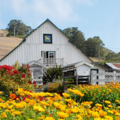 Harley Farms Goat Dairy : Pescadero, California