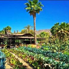 Flora Farms : Los Cabos, Mexico