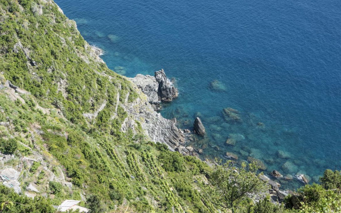 Wine of Cinque Terre: Vineyard Visit & Wine Tasting at Grand Hotel Portovenere