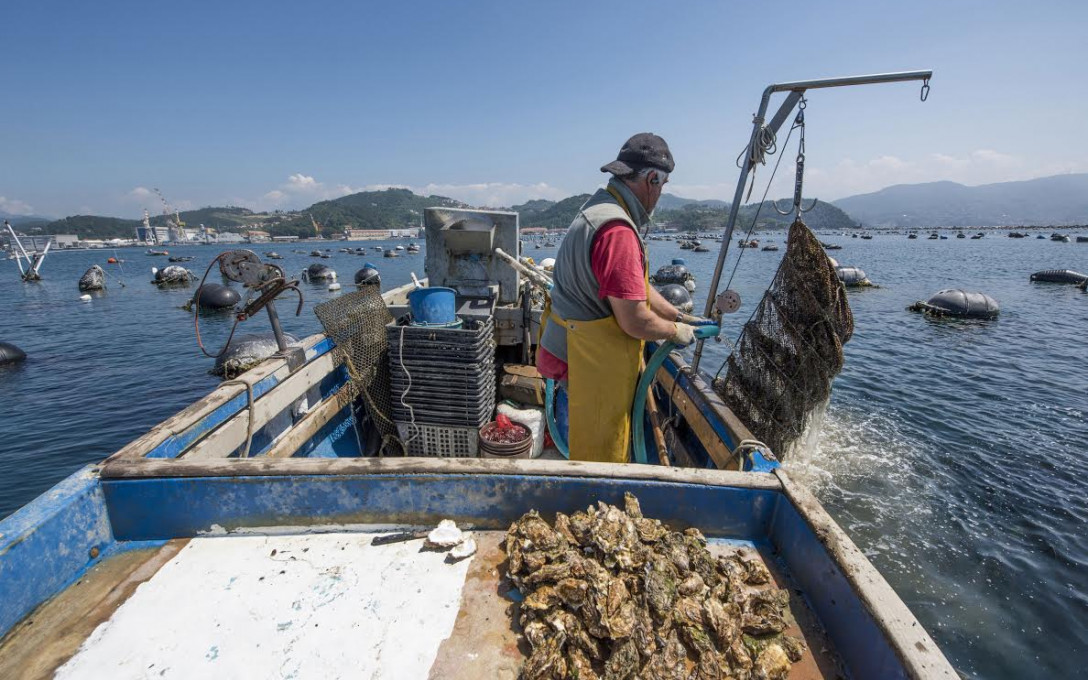 Spezia's Oyster Farms: Behind the Green Oysters of the Gulf of Poets at Grand Hotel Portovenere