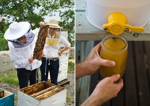 Introduction to Beekeeping, January 14th