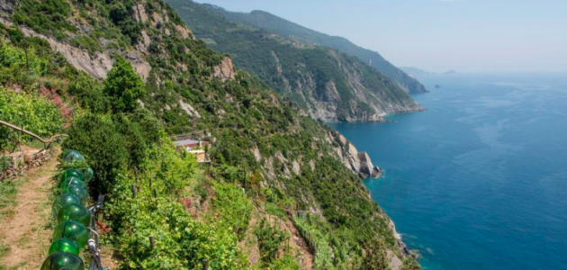 Wine of Cinque Terre: Vineyard Visit & Wine Tasting at Grand Hotel Portovenere
