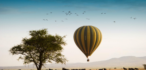 Honeymoon Safari: A Match Made in Heaven
