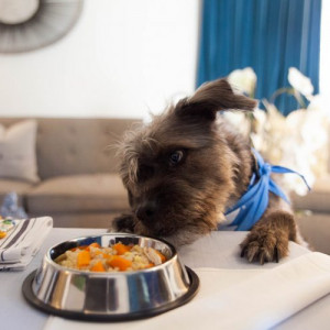 Dog Be With You Package at Fairmont Miramar Hotel & Bungalows