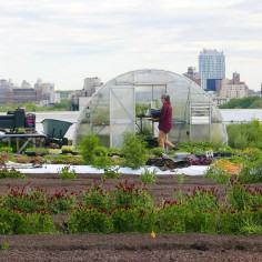 Farmer for a Day: Hands-On Rooftop Farming Workshop, June 10th, $35