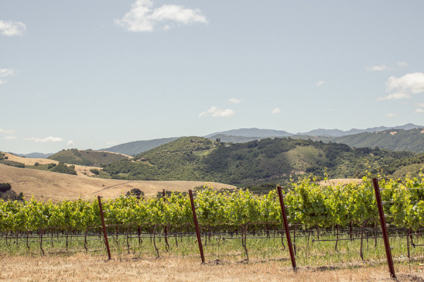 Holman Ranch Vineyards & Winery