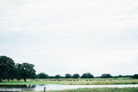 Vintage Oaks Ranch