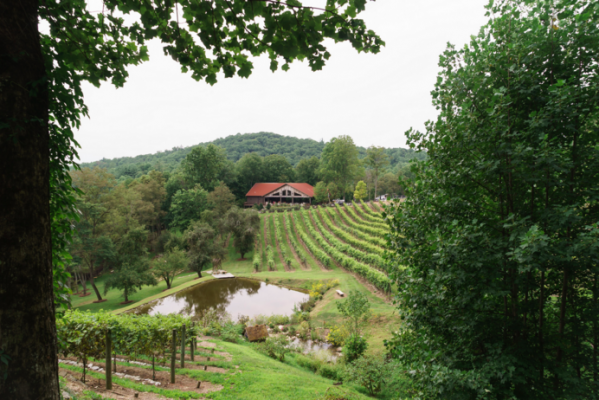 The Vineyard at 37 High Holly