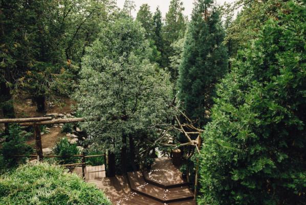 Arrowhead Pine Rose