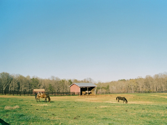 Wolftrap Farm