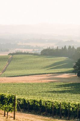 Vista Hills Vineyard