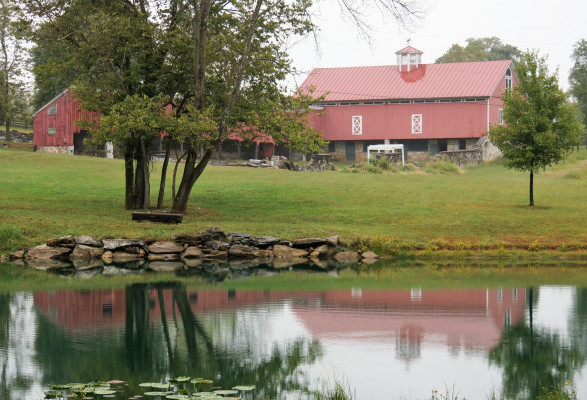 Wild Goose Farm