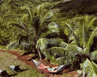 The Palmwood
