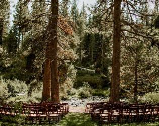 Dancing Pines