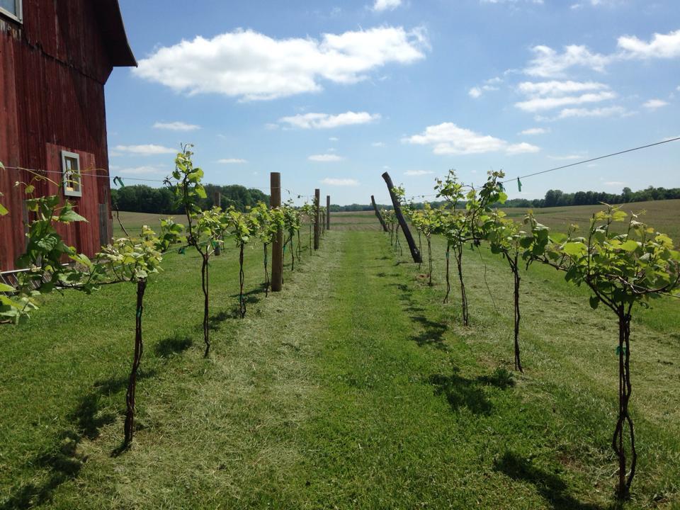 Vineyard at Porter Central Sunbury Ohio Venue Report